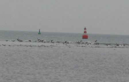 longtails-and-buoys-1