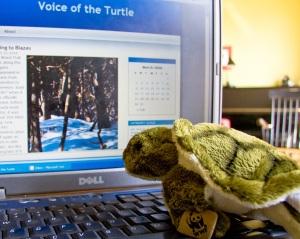 wwf-turtle